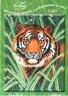 """Набор для вышивки """"Тигр"""" 1 шт. (""""РС студия"""" С-257) 23см х 33см"""