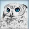 """Набор для изготовления картины из страз Взгляд совы 1 шт. (""""Алмазная живопись"""" АЖ-1549) 25см х 25см"""