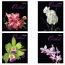 Тетрадь формат А5 48л. Орхидеи 1 шт. (BRAUBERG 401287)