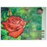 Папка для акварели/планшет формат А2 Алая роза папка 20 шт. (PALAZZO ПЛАР/А2) 360мм х 480мм