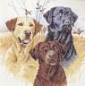 """Набор для вышивки """"Охотничьи собаки"""" 1 шт. (""""Dimensions"""" 35096) 30см х 30см"""