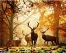 """Набор для раскрашивания акриловыми красками Лесные олени 1 шт. (""""ФРЕЯ"""" PNB-1-57) 50см х 40см"""