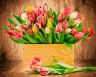 """Набор для раскрашивания акриловыми красками Тюльпаны 1 шт. (""""ФРЕЯ"""" PNB/R1 №80) 40см х 50см"""